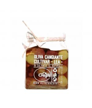Olive Cangiante GREGORI CULTIVAR LEA in salamoia al naturale