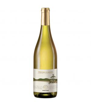 VERDICCHIO Matelica DOC Provima white wine from the hills of Matelica