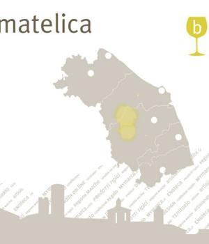 il VERDICCHIO di MATELICA 6 bottiglie Vino bianco da vitigno autoctono